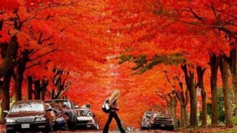 天下游 | 秋光无限好!温哥华枫叶美得令人睁不开眼