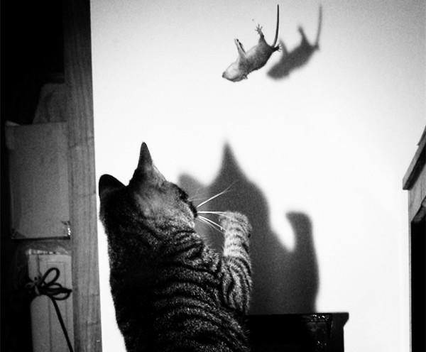 秋季灭鼠正当时 今天起申城统一集中投放灭鼠药