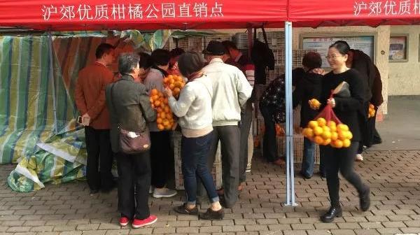 柑橘进公园首日3万斤销售一空,月底前持续供应!