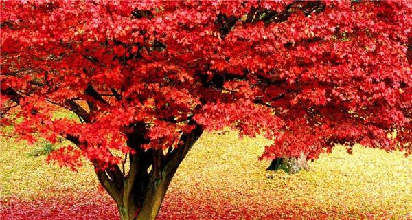 没有秋风秋雨,哪来红叶如丹?