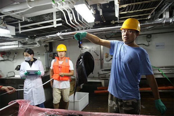 图说:紫魟实验称重 来源:上海海洋大学.jpg