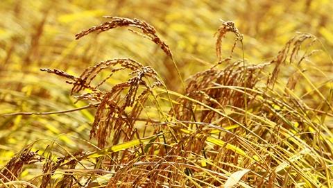 哈尔滨农产品在沪展销     九成为绿色有机产品