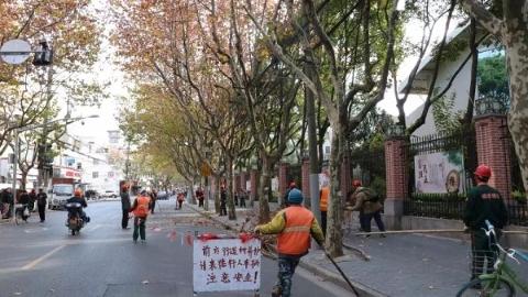 """行人车辆请注意!上海市110余万株行道树今天开始""""剃头"""""""