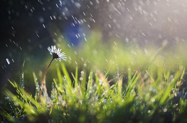 雨水时节话养生 春季应保持心情愉悦