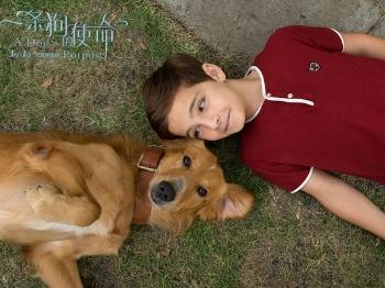 【文体话题】《一条狗的使命》被爆涉嫌虐宠,导演否认