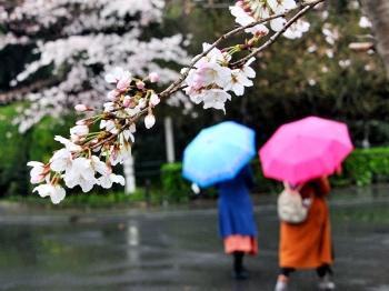 申城今冬已长达四个月 本周六再次重启入春