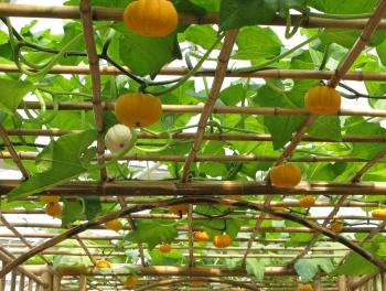 【科普导游】走进上海都市菜园 做个快乐的都市农夫