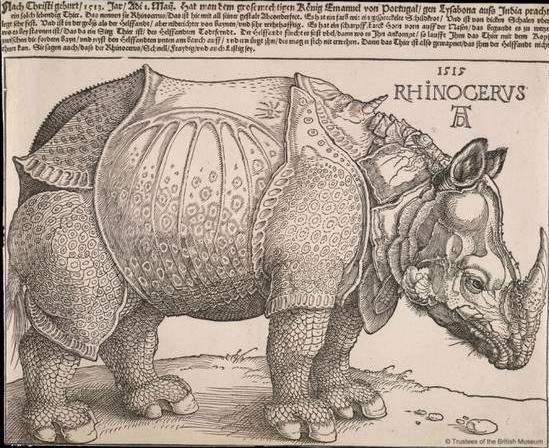 丢勒的木版画《犀牛》.jpg