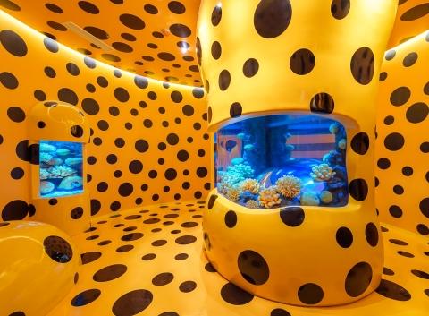 狮子鱼条纹爬上墙壁 长风海洋世界艺术水族馆科普中心揭幕