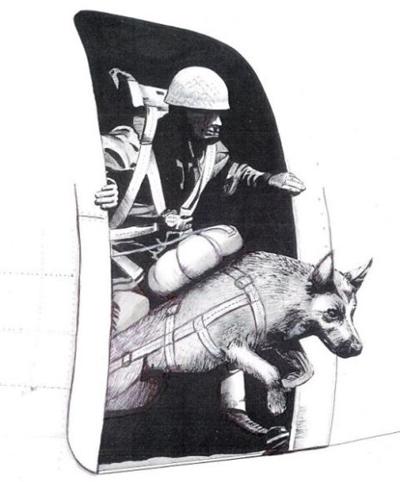 """""""动物战士""""的奇特经历"""