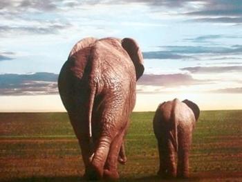 上海国际绿色电影周探讨野生动物保护
