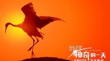【佳片有约】 自然纪录片才是最佳亲子电影