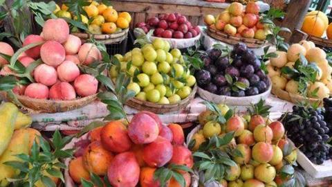 瓜果桃梨风味佳 300余上海地产优质农产品集中直销