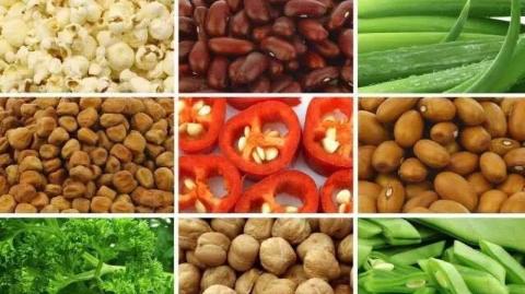 入乡问俗·种菜有风险 | 从国内私运种子种菜,意大利一华人农场被查封