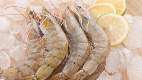 田园美食节丨鲜嫩肥美!奉贤南美白对虾迎来捕捞旺季