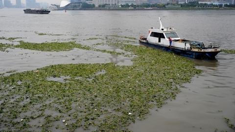 """这类""""盘中餐""""要消失!上海海洋大学研制成功海洋""""防火墙"""""""