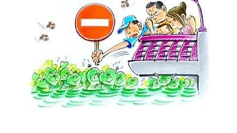独家述评丨黄浦江不欢迎水葫芦