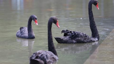徐家汇公园黑天鹅被盗案今日宣判