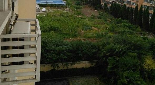 """莘北路518创业园空地上竟种起蔬菜成""""菜园"""""""