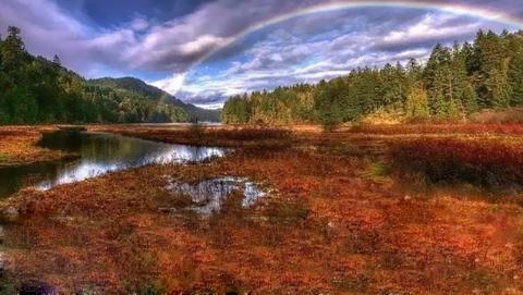 天下游 |  初秋赏鲑季,温哥华附近赏鲑完全攻略