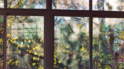 全球作家自家窗前的风景