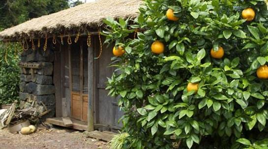 一年好景君须记,江南人家多橘柚