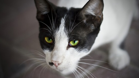 10岁男孩逗猫被抓伤眼 专家:动物眼伤非个例