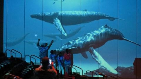 十一黄金周不可辜负 来航海博物馆和鲸鱼、海豚等生物亲密接触