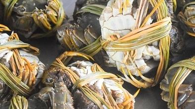 崇明蟹可以和阳澄湖蟹叫板啦! 现代农技育苗打造崇明清水蟹品牌