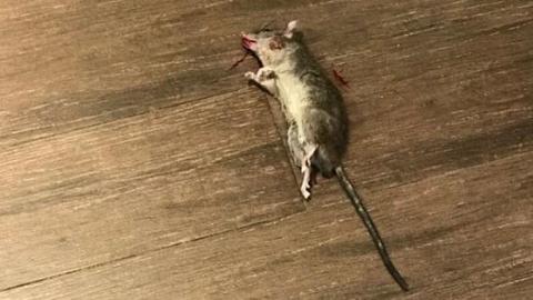 天上掉下只大老鼠!梅陇镇广场Johan面包房被责令停业整改