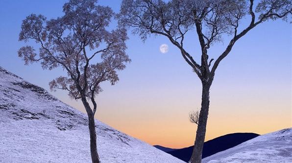 乡情是一棵镌刻着记忆的树