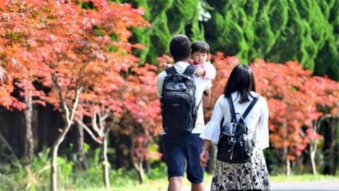 上海枫树最多的公园是哪个?2018上海红枫节邀你来这座公园赏枫啦