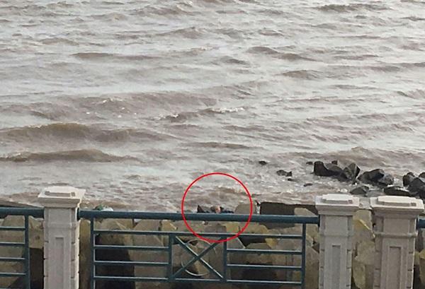 老人一度落水并顺着水流有被冲走的危险.jpg