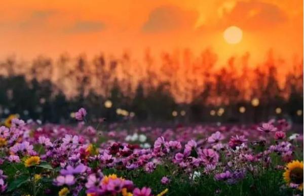 林少华:暮色,篱角,翠菊花