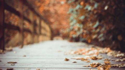 看叶,看天,看秋去