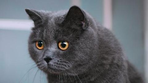 带回女网友来约会 家里的名猫却没了