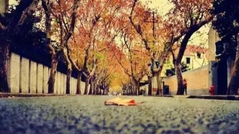 上海深秋最上镜的地方,你去过几个?