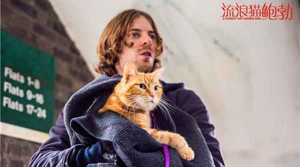 """你知道那只有名的""""流浪猫鲍勃""""吗?去看这部关于他的暖心电影吧"""