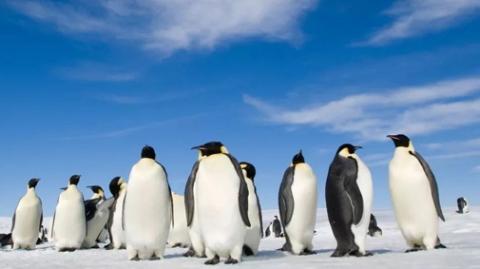 帝企鹅:生命的不可思议