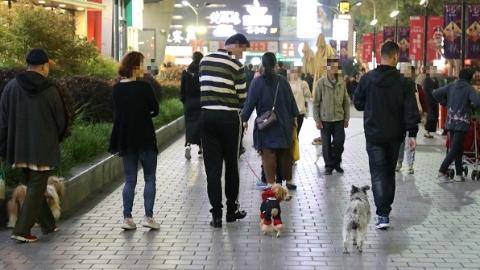 百联滨江广场遛狗不拴绳 宠物乱窜吓到老人小孩常引纠纷