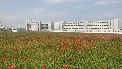 【新时代新气象新作为】进博60″(34)|国家会展中心周边荒地大变样:有的变花海,有的变湿地