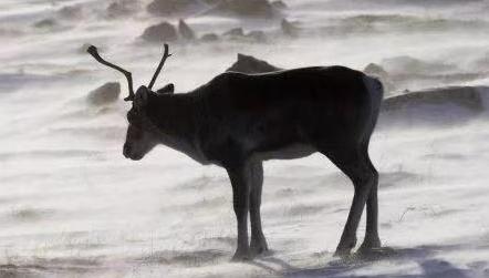 过去40年,全球野生动物数量急剧下降