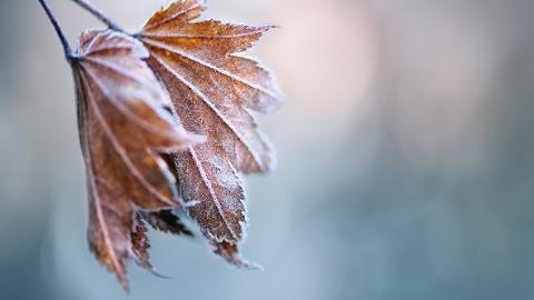 """今日""""立冬""""迎冷空气 明天仍有雨水"""