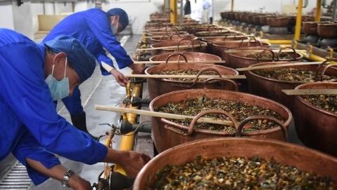 百口紫铜锅上午开炉熬膏 拉开上海市民冬季养生序幕