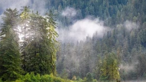 地球原貌渐失,全球仅剩5个国家有大面积荒野地貌