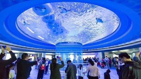 """上海海昌海洋公园上午开园 """"镇园之宝""""揭面纱"""
