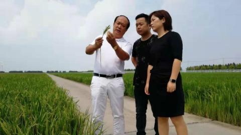 全国种粮面积最大的种粮大户竟是阿拉上海人!儿女重回农门陪父亲把沧海变桑田