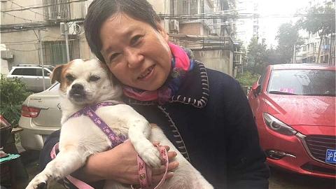 """暖!杨浦长白社区一流浪狗""""逆袭""""成为宠物狗"""
