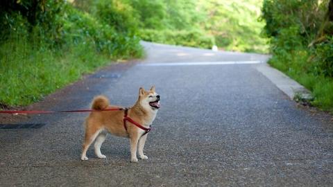 文明养犬大家谈|有了养犬条例还须细化落实