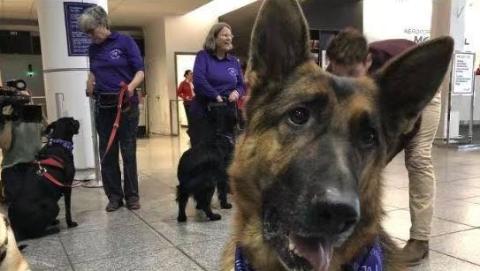 有飞行焦虑症怎么办?别担心,加拿大机场来了30条安慰犬